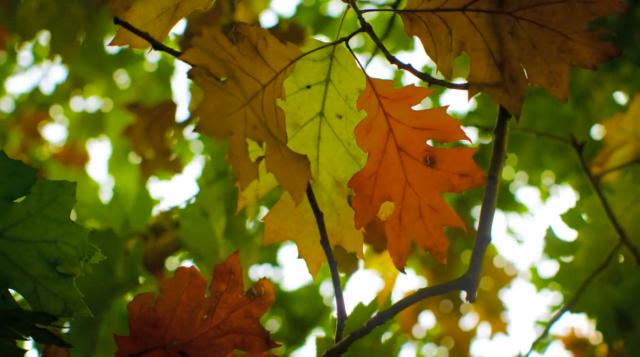 Fall_Jamie Scott_02