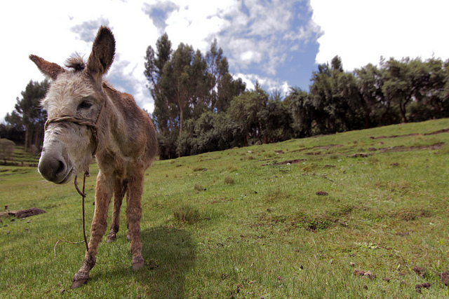 A Few Weeks in Peru_08
