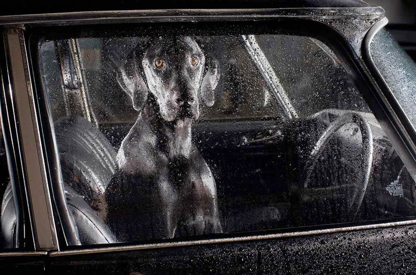 The Silence of Dogs in Cars - Martin Usborne_03