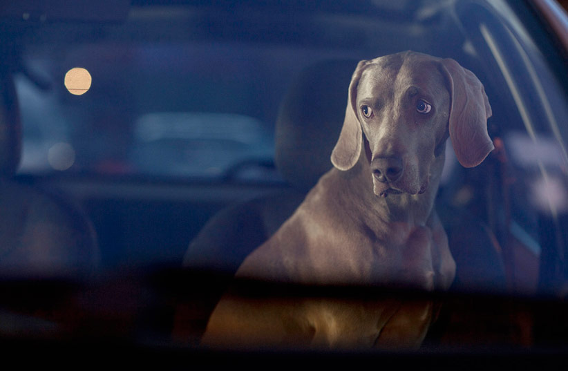 The Silence of Dogs in Cars - Martin Usborne_04