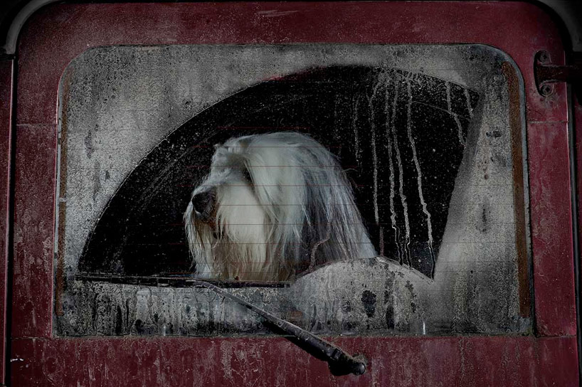 The Silence of Dogs in Cars - Martin Usborne_05