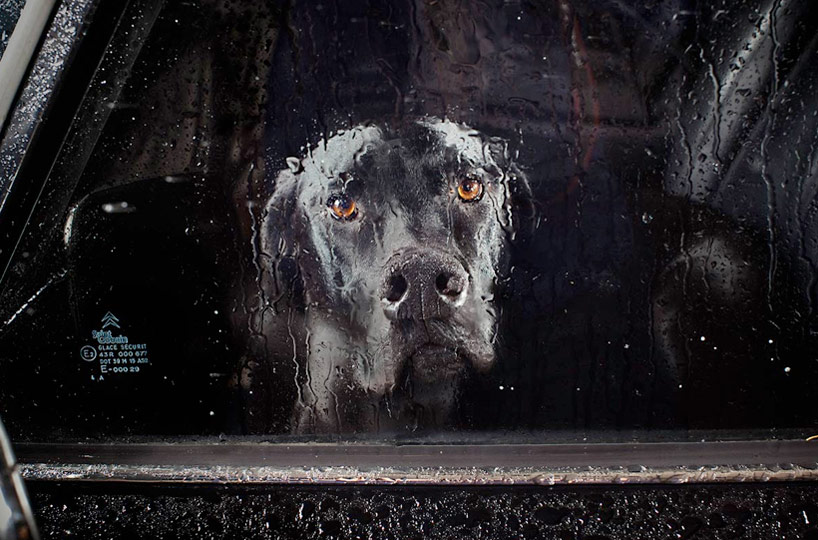 The Silence of Dogs in Cars - Martin Usborne_08