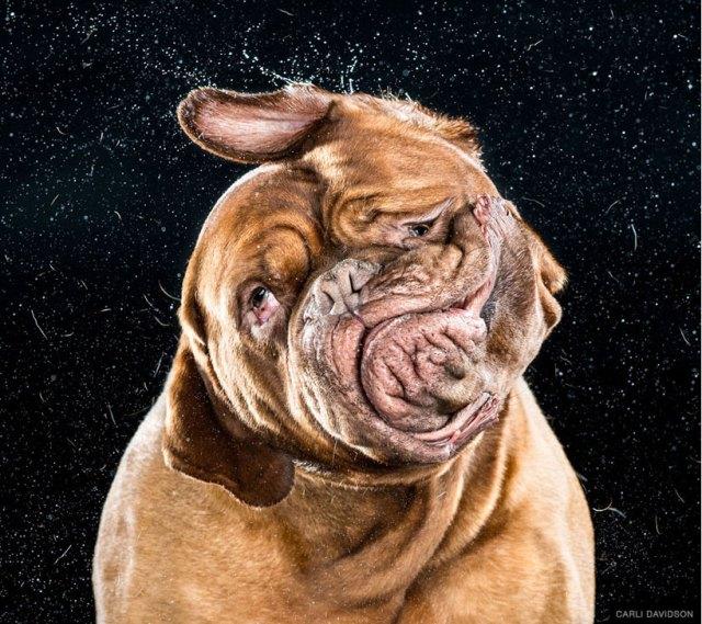 Carli Davidson Dog Shake_02