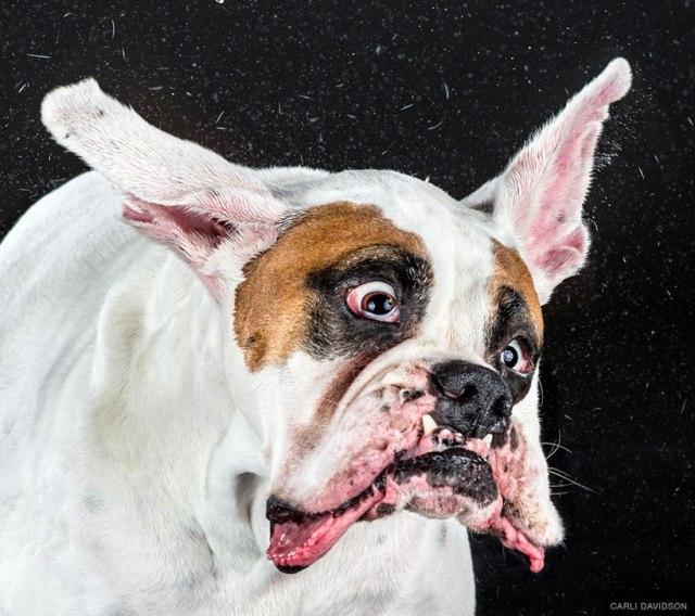 Carli Davidson Dog Shake_03