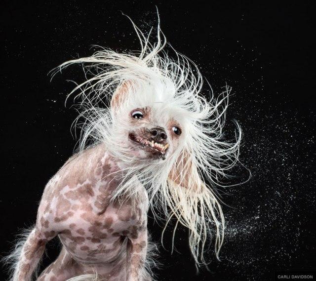 Carli Davidson Dog Shake_04