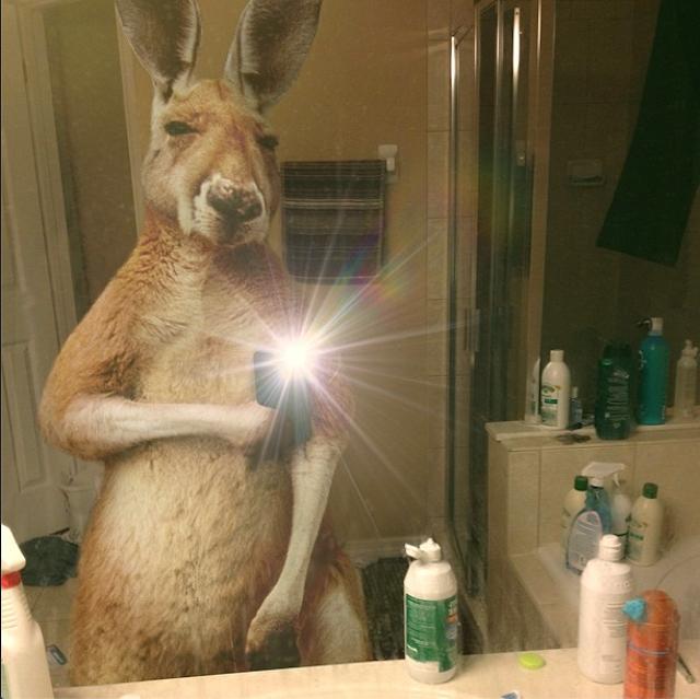Silvio Medeiros - Wildlife Selfies_09