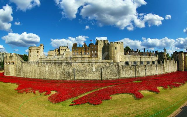 Paul Cummins-Ceramic Poppies Tower of London_01