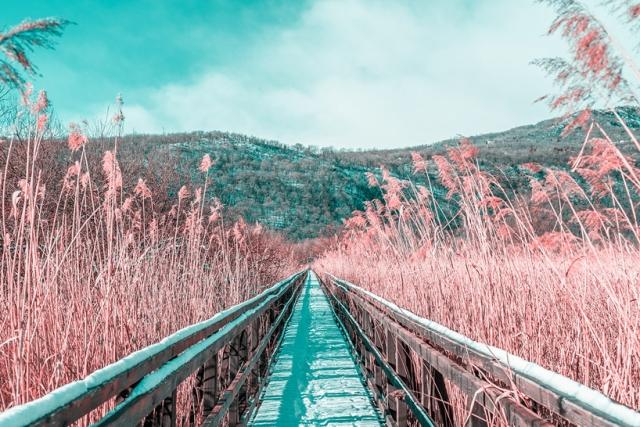 Paolo-Pettigiani-Infared Landscapes_00