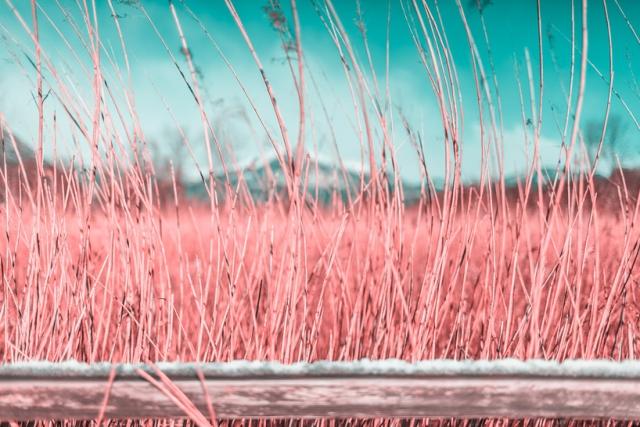 Paolo-Pettigiani-Infared Landscapes_09